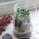 【vol.6WS】 多肉植物の寄せ植え epo -gardening+flowerzakka-